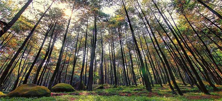 Taman Wisata Alam Gunung Pancar Sentul Bogor