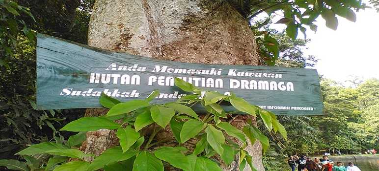 Hutan Dramaga dekat Situ Gede Bogor