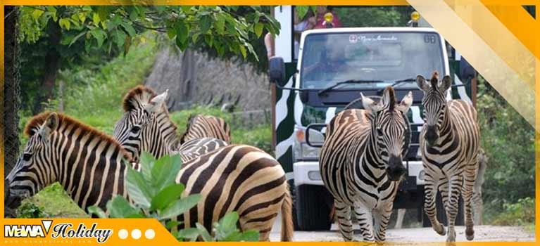 wisata puncak bogor taman safari