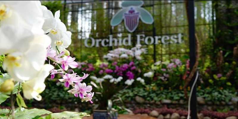 Harga Tiket Masuk Orchid Forest Lembang Bandung
