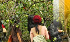 Wisata edukasi kebun buah mangunan